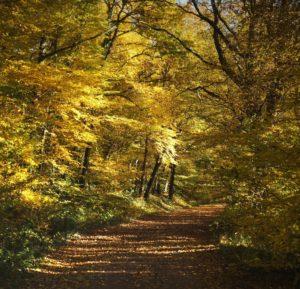 La forêt de Tronçais, célèbre pour ses chênes plantés par Colbert.