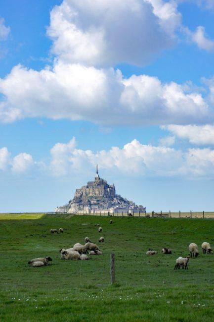 agneau de prés salés au mont saint-michel